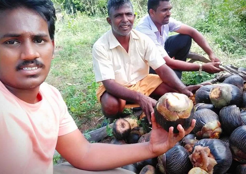 பனை விதை சேகரிப்பு/தேனி நாம் தமிழர் கட்சி