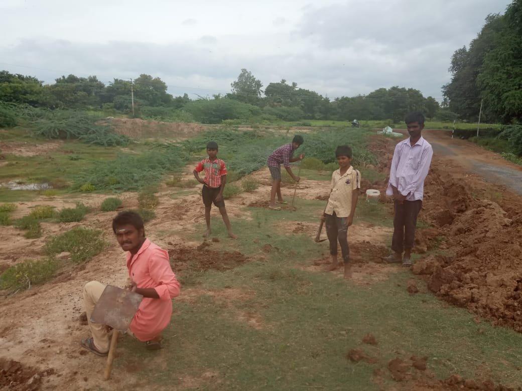 பனைவிதை நடும் நிகழ்வு- பென்னாகரம் சட்டமன்றத் தொகுதி
